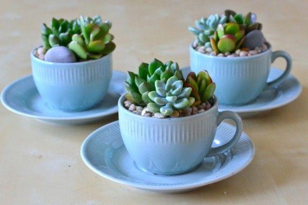 Insta Worthy Succulents