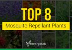 Top 8 Mosquito Repellant plants