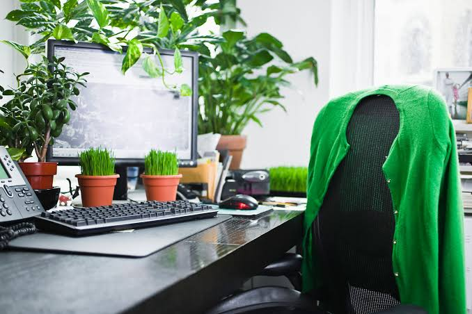 Place Stress-Relieving Plants