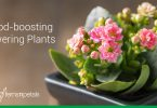Mood Boosting Flowering Plants