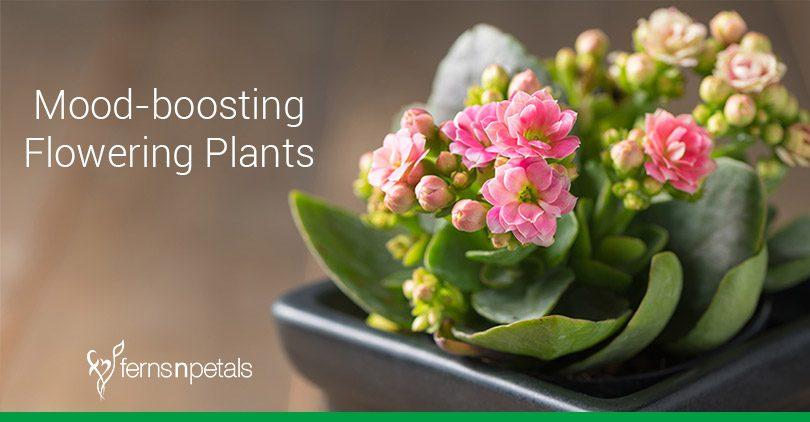 Mood Boosting Flowering Plants