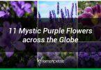 11 purple flowers from around the globe
