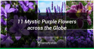 11 purple flowers from around the globe