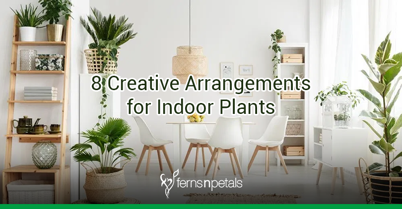 8 Creative Arrangements For Your Indoor Plants Ferns N Petals
