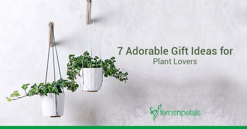 7 adorable gift ideas for plant lovers