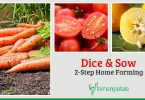 Dice & Sow- 2 Step Home Farming