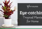 eye-catching-tropical-plantg