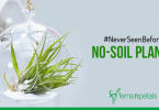 #NeverSeenBefore No-Soil Plants
