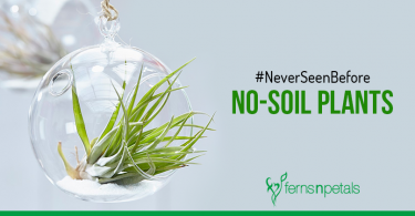 #NeverSeenBefore No-Soil Plants