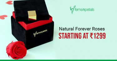 Natural Forever Roses starting at 1299