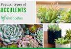 7 popular succulents