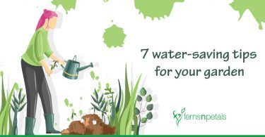 7-water-saving-tips-for-your-garden