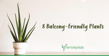 balcony-plants