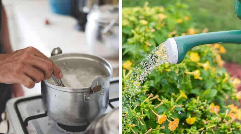 7 Water-saving Tips for your Garden - Ferns N Petals