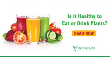 Is it healthy to eat or drink plants?