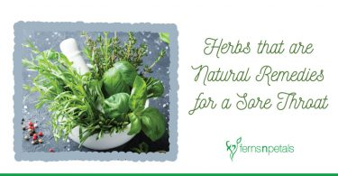 Herbs that are Natural Remedies for a Sore Throat