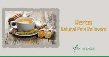 herbs-natural-pain-relievers