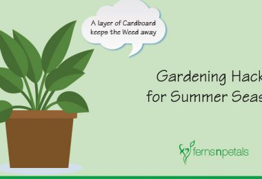 Gardening Hacks for the Summer Season