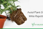How to Avoid Plant Shock while Repotting