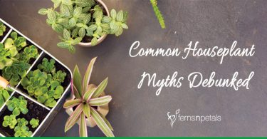 Common Houseplant Myths Debunked