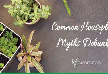 Common Houseplant Myths Debunked