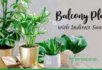 Top 5 Balcony Plants that Need Indirect SunlightTop 5 Balcony Plants that Need Indirect Sunlight