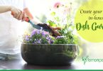 Create your own in-house Dish Garden