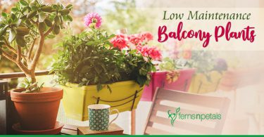 Low Maintenance Balcony Plants