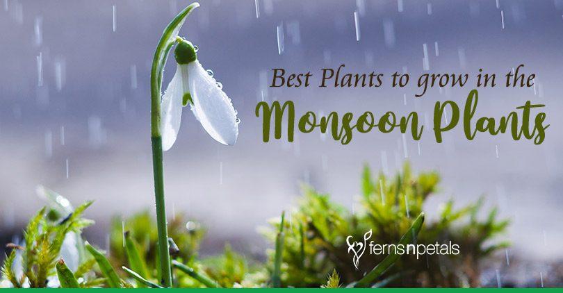 Best Plants to grow in the monsoon season