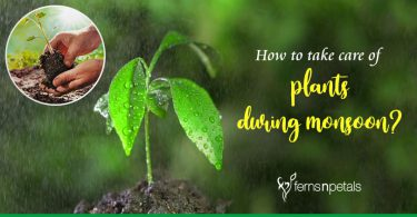 How to take care of plants during monsoon