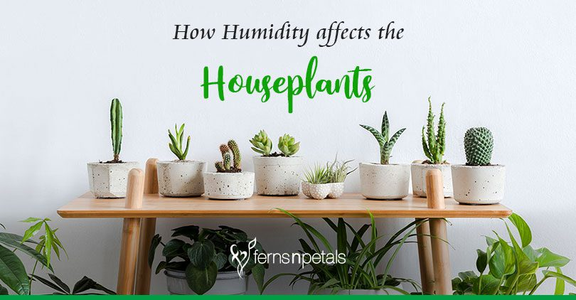 How humidity affects your houseplants