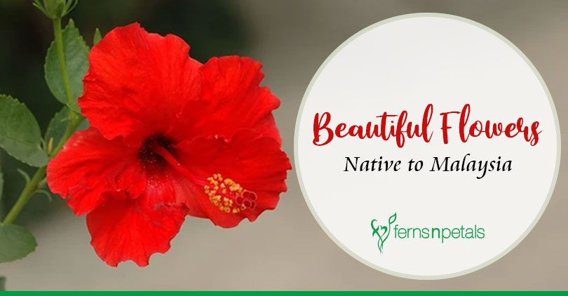5 Beautiful Flowers That Are Native to Malaysia