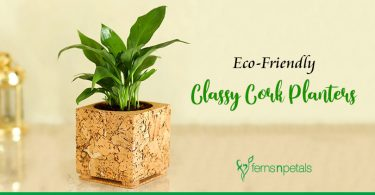 Eco-Friendly Classy Cork Planters