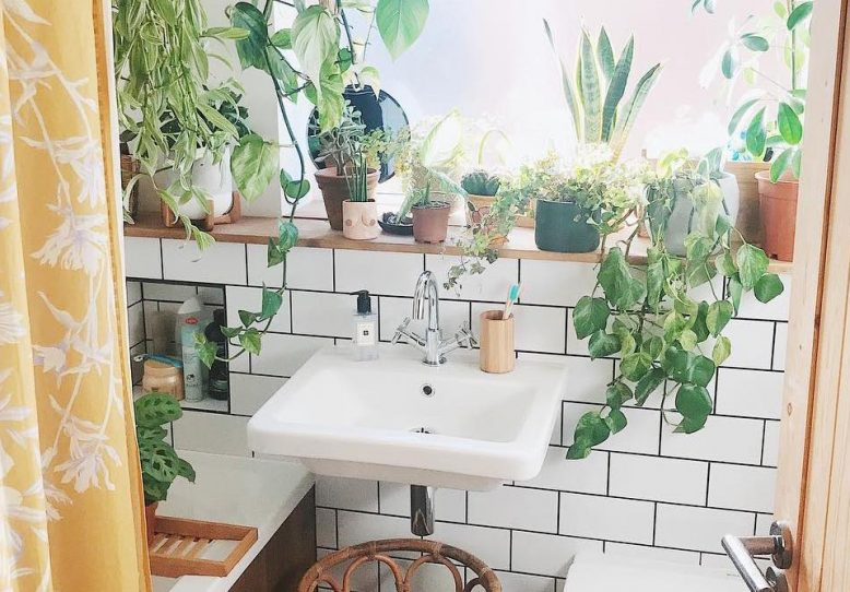 Place plants in more humid rooms