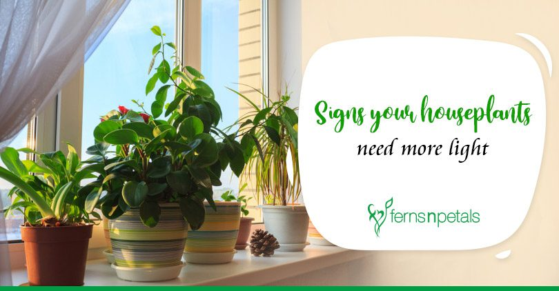 Signs your houseplants need more light