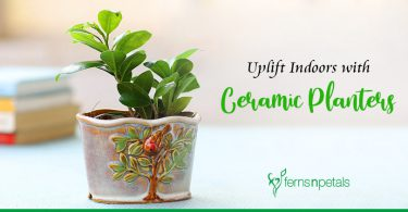 How Ceramic Planters can uplift the Indoors