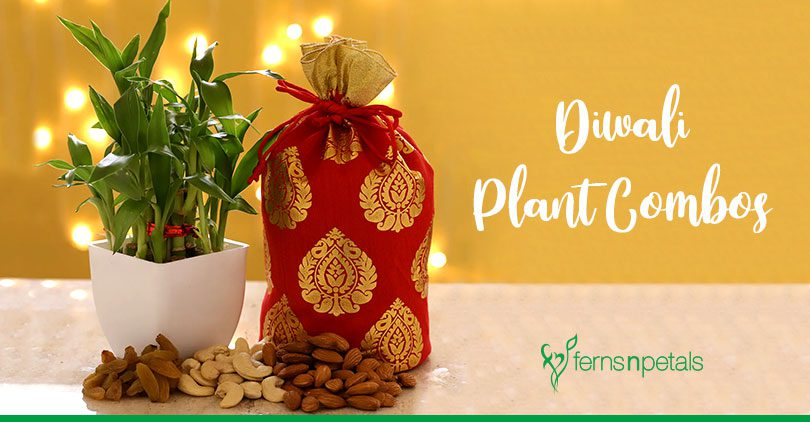 Green Diwali with Beautiful Plant Combos