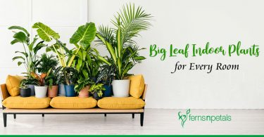 Top 8 Big Leaf Indoor Plants for Every Room
