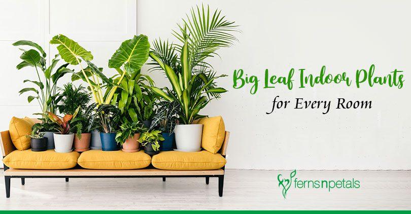 Top 8 Big Leaf Indoor Plants for Every Room
