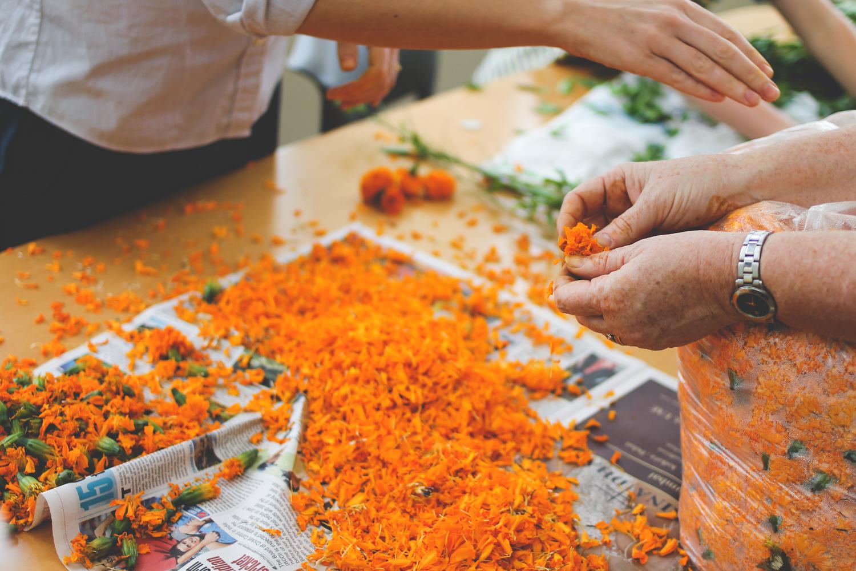 Flowers for Rangoli