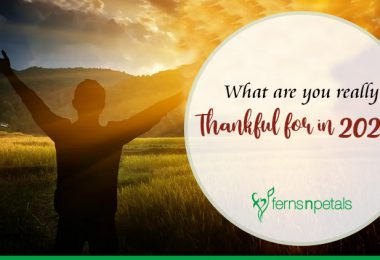What are you really thankful for in 2020?