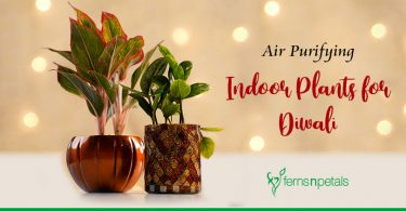 How to make Indoors Clean & Green for Diwali