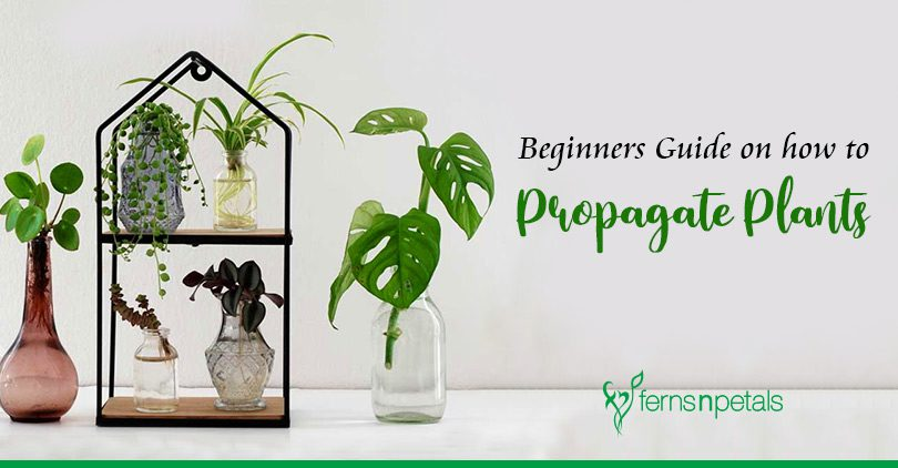 Beginners Guide on How to Propagate Plants