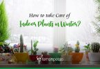 How to Take Care of Indoor Plants in Winter?