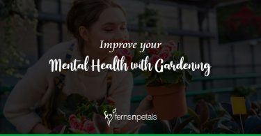 How can Gardening Improve your Mental Health?