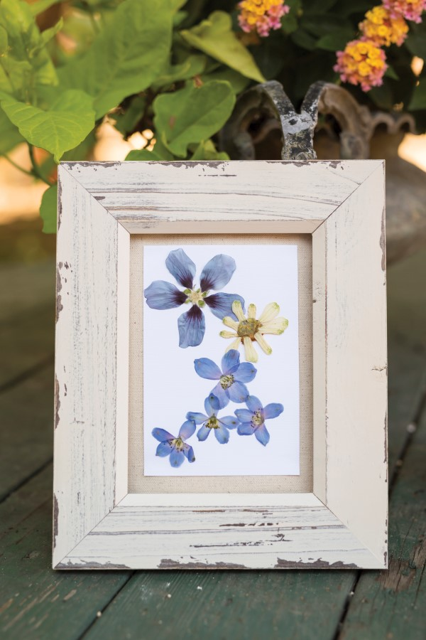 How to Frame Pressed Flowers?