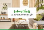 Cover Image for Indoor Plants as Housewarming Gift