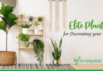 Top 7 Elite Plants that will Add Charm to your Home Decor