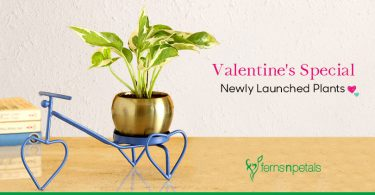Newly Launched Plants for the Season of Love