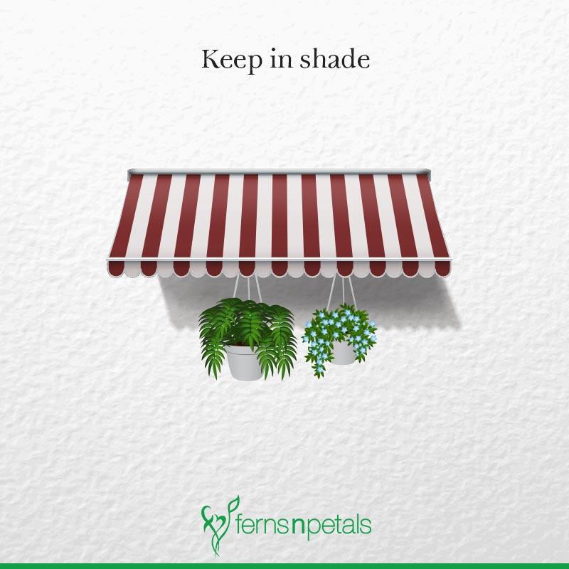 Keep in Shade